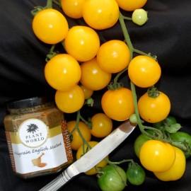 بذر گوجه انگور فرنگی هارتمن