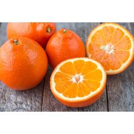 نهال نارنگی تانجلو
