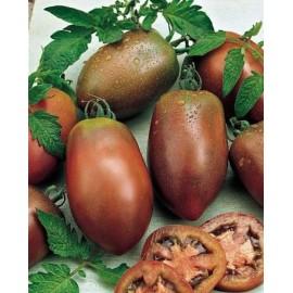 بذر گوجه بنفش روسی