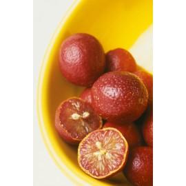 نهال نارنگی قرمز خونی نایاب