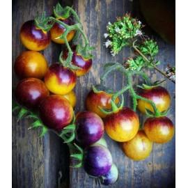 بذر گوجه بری آبی طلایی