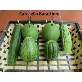 بذر خیار کاروسل باراتیری