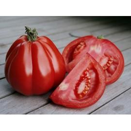 بذر گوجه برش دار Gezahnte
