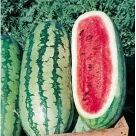 بذر هندوانه فابر فاکس (Fairfax melon)