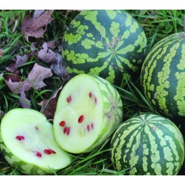بذر هندوانه تخمه ژاپنی یا جابانی