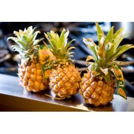 نهال آناناس کویین ویکتوریا
