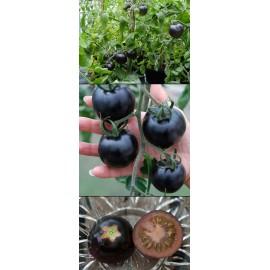 بذر گوجه سیاه امریکایی