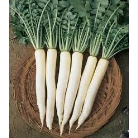 بذر ترب سفید ژاپنی