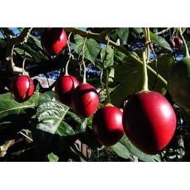 بذر گوجه درختی (Tamarillo)
