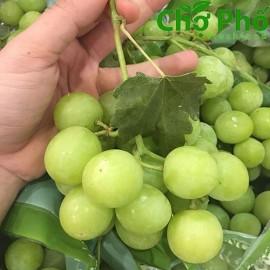 نهال انگور آتام درشت