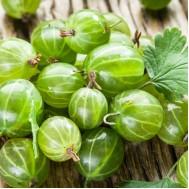 نهال گوسیبری سبز یا انگور فرنگی سیبری
