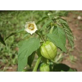 مجموعه کاشت انگور محلی