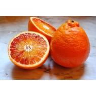 نهال پرتقال خونی ژاپنی غول آسا