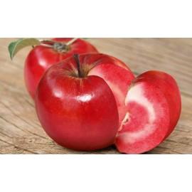 نهال سیب تو سرخ