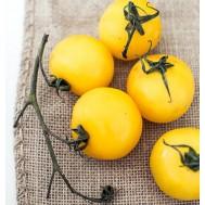 بذر گوجه زرد درشت امریکایی