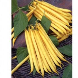 بذر لوبیای زرد فرانسوی