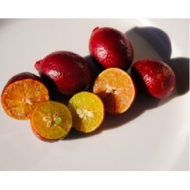 نهال لیمو ترش قرمز پیوندی