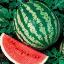 بذر هندوانه کریمسون