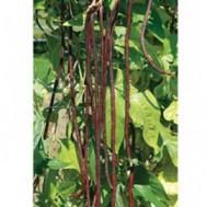 بذر لوبیا رشته قرمز