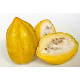 بذر خربزه درختی زرد (پاپایا زرد)