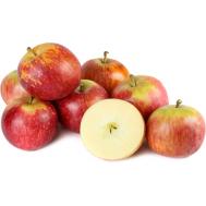 نهال سیب فوجی ژاپن
