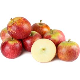 بذر سیب فوجی ژاپن
