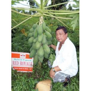 بذر خربزه درختی قرمز یا پاپایا f1