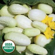 بذر خیار چنبر سفید رویال آمریکایی