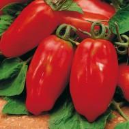 بذر گوجه فرنگی قرمز زنگوله ای