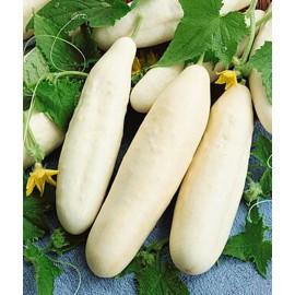 بذر خیار سفید خاردار