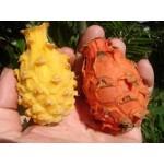 نهال دراگون فروت نارنجی