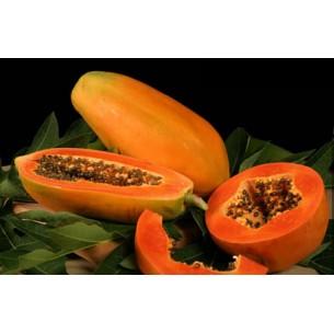 بذر خربزه درختی یا پاپایا f1