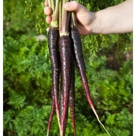بذر هویج بنفش