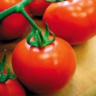 بذر گوجه گرد پوست نازک