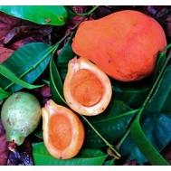 نهال میوه آکار کوبال سوسو