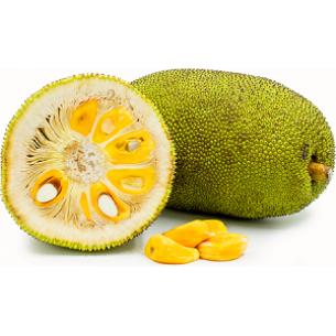 نهال جک فروت  ویتنامی میوه 50 کیلویی (ارتقاع تا 70 سانت)