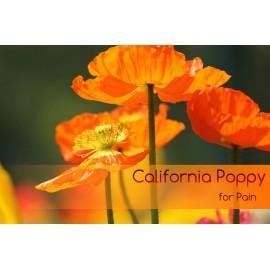 بذر کمیاب شقایق کالیفرنیایی California poppy