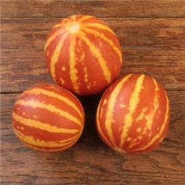 بذر خربزه ببری Tigger melon