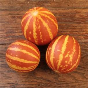 بذر Tigger melon