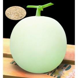 بذر خربزه سفید چینی white melon