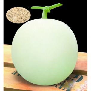 بذر خربزه white melon