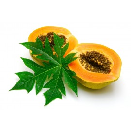 نهال پاپایا تایوانی پاکوتاه نارنجی