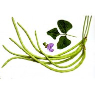 بذر لوبیا نیم متری