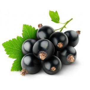 بذر کارنت سیاه نروژی
