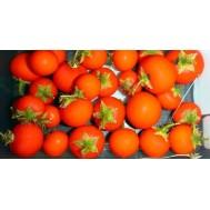 بذر گیاه تزیینی کاکروچ بری Cockroach Berry