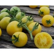 بذر گوجه فرنگی زرد ارگانیک