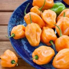 بذر فلفل تند هابانرو نارنجی