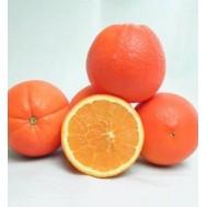 نهال پرتقال فوکوموتو ژاپن