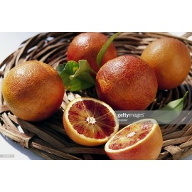 نهال پرتقال خونی سانگوینلو