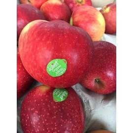 بذر سیب ژولیت فرانسه